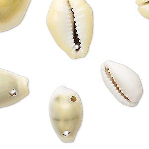 bead, monita cowrie shell (natural), 16x10mm-25x18mm, mohs hardness 3-1/2. sold per 130-gram package, approximately 60-70 shells.