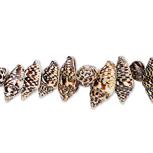 bead, nassa tiger shell (natural), 9x6mm-12x6mm shell, mohs hardness 3-1/2. sold per 16-inch strand.