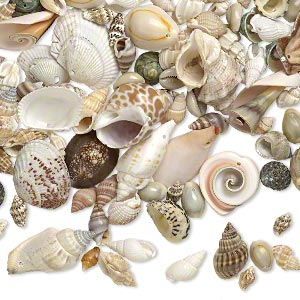 drop mix, seashell (natural), 13x8mm-48x36mm mixed shape. sold per 1/2 pound, approximately 170 to 210 drops.