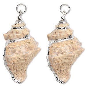 focal, fimbriate shell (natural) and silver-plated steel, white / dark brown / light brown, 40x25mm. sold per pkg of 2.